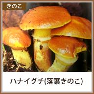 ハナイグチ(落葉きのこ)
