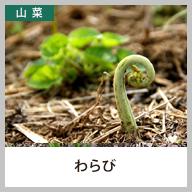 わらび(蕨)